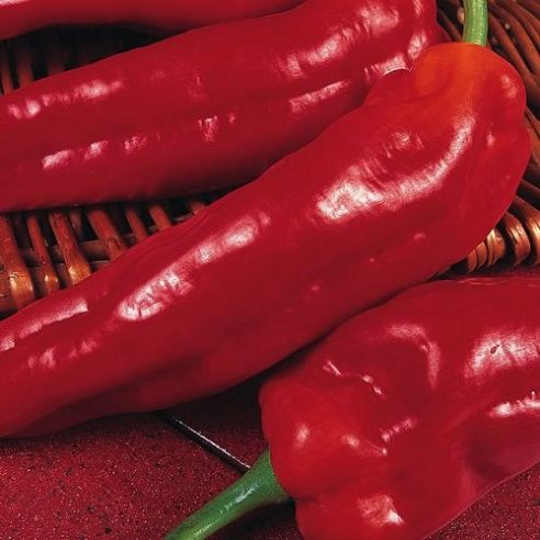Sweet Pepper Marconi Red Seeds 50 seeds / 300 seeds